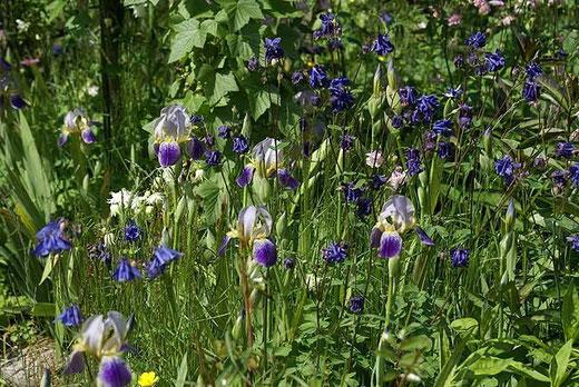 Blüten-Wirr-Warr