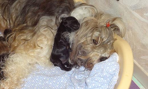 Rüde Nr. 2 - 6 Tage alt mit Mama Milka