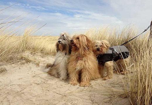 Das Trio in den Dünen von Houstrup Strand