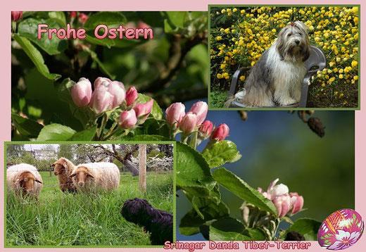 Frohe Ostern wünschen die Srinagar Danda Tibet-Terrier