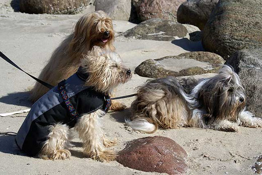 Unsere drei Mädels am Strand