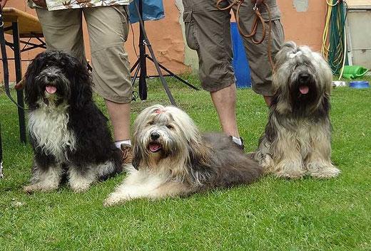 Enya, Milka und Percy