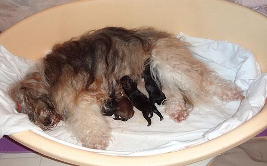 Milka und die F-Wurf-Babys nach der Geburt