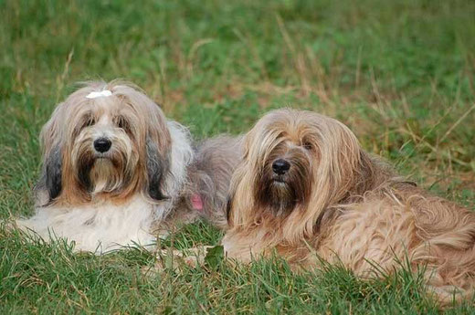 Berta und Bu-laa
