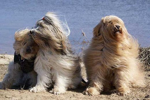 Das Trio im Winde