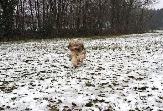 Milka genießt den Winter