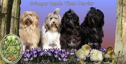 Frohe Ostern wünschen die Tibet-Terrier vom Zwinger Srinagar Danda