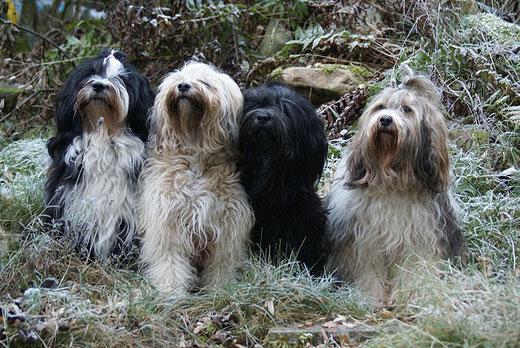 1.1.2017 - Lisha, Fiona, Yeshi und Milka