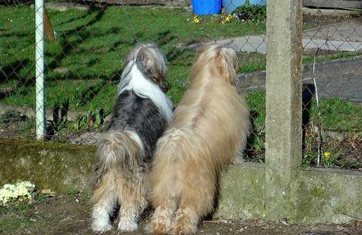 Spionieren am Gartenzaun
