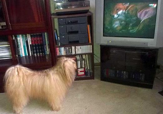 Bya-ra beim Fernsehen