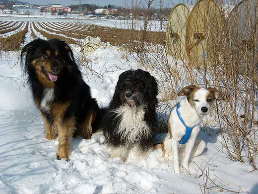 Enya und ihre Freunde