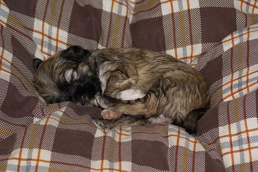 Schlaf, Fionalein, schlaf!