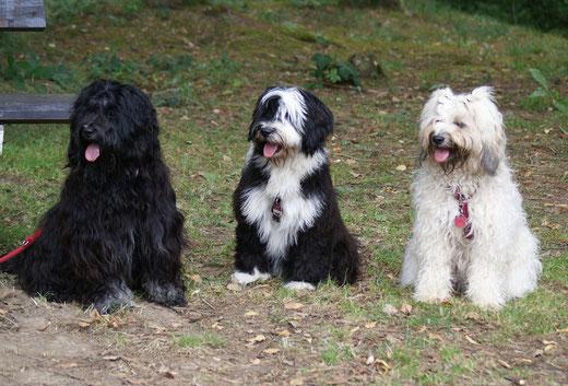 Yeshi, Lisha und Fiona in Breitenau 2015