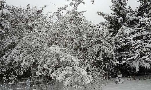 Der verschneite Garten