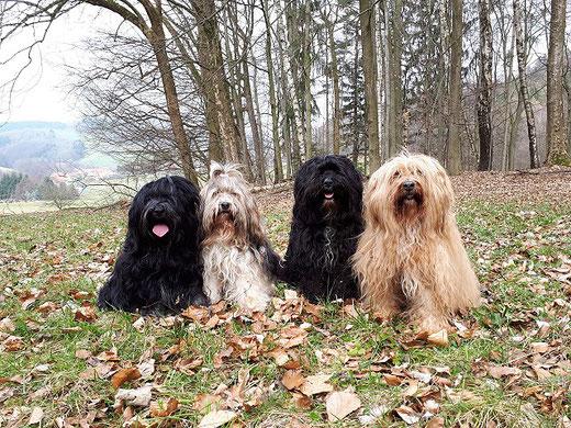 Yeshi, Milka, Kar-mi und Bya-ra im Odenwald