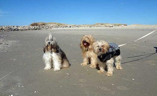 Drei Tibi-Mädels am Strand