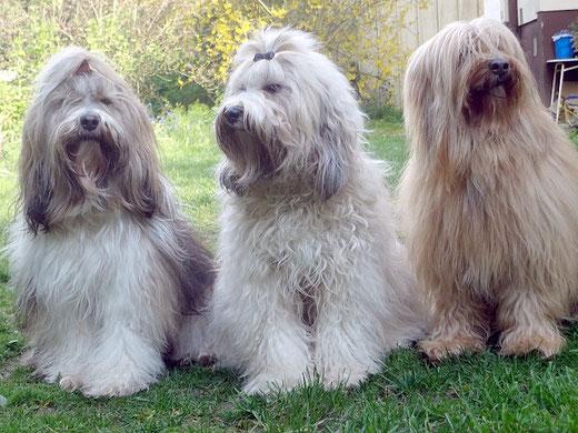 Milka, Fiona und Bya-ra im Mai 2016