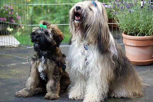 Milka und Percy