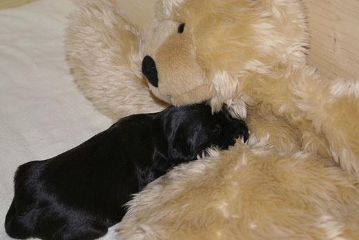 """""""Ga-la"""" - Kuscheln mit Teddy"""