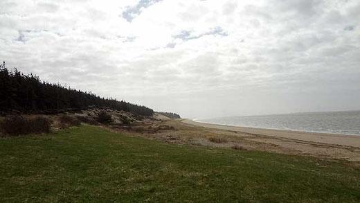 Strand an der Marbæk Plantage