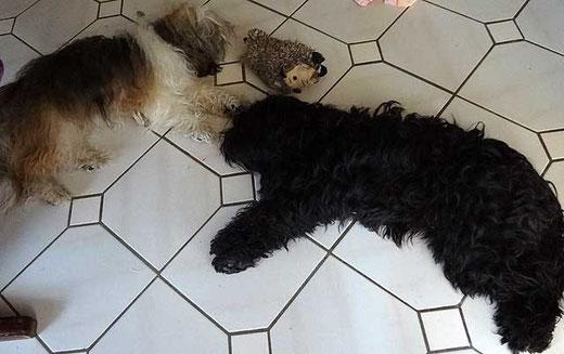 Milka und Kar-mi