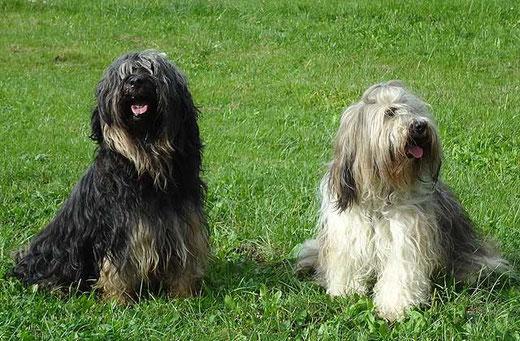 Brisgo und Milka
