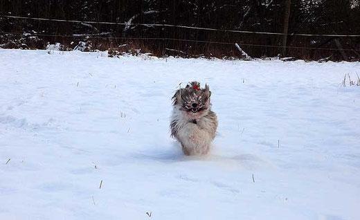 Milka-Schneehasi