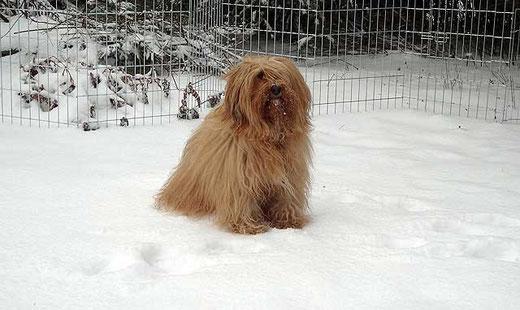 Bya-ra im Schnee - März 2013