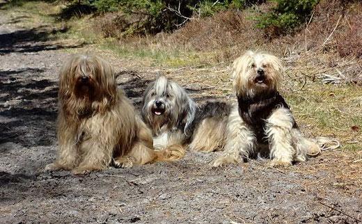 Unsere drei Damen in der Klitplantage am Blaabjerg