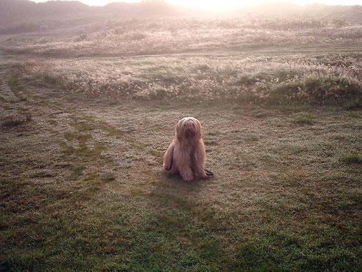 Bya-ra und der geheimnisvolle Nebel