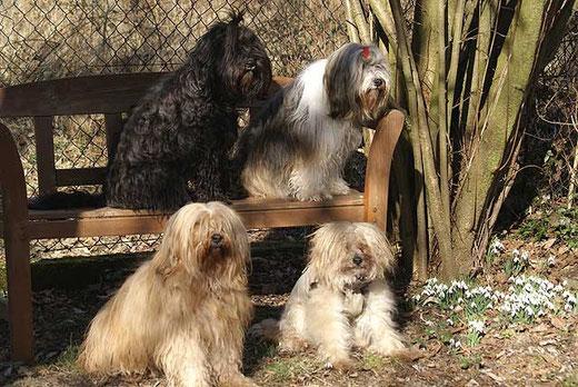 Meine Tibi-Damen genießen die Märzsonne