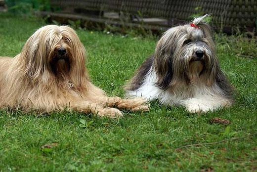 Bya-ra und Milka im Garten