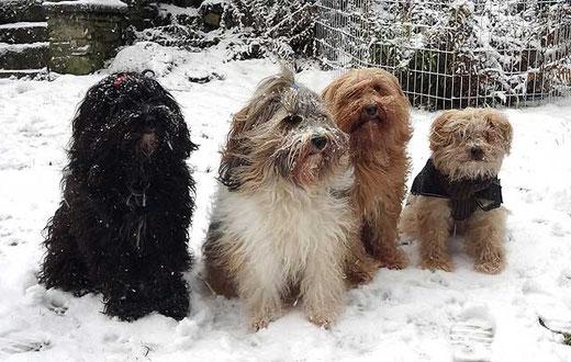 Kar-mi, Milka, Bya-ra und Indra im Schnee