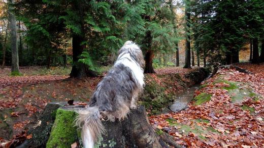 Milka im Wald auf ihrem Thron