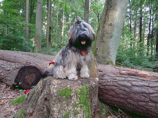 Mon-sha im Wald