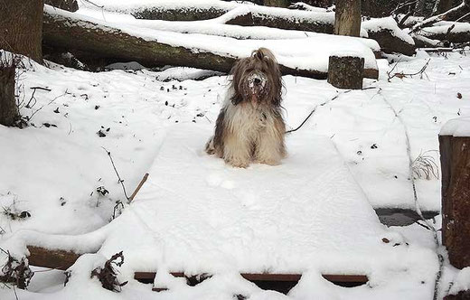 Milka im verschneiten Winterwald
