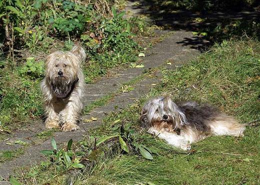 Indra und Milka im Garten