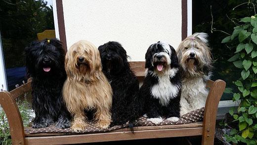 Yeshi, Bya-ra, Kar-mi, Lisha und Milka