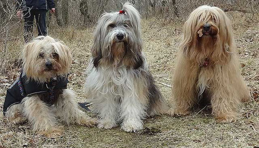 Indra, Milka und Bya-ra auf dem Rückweg