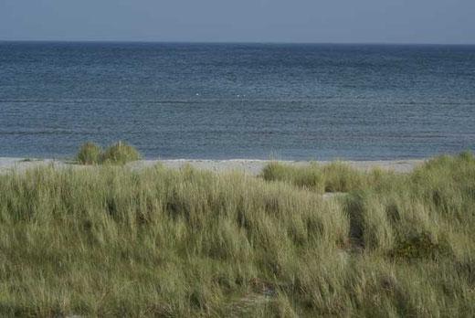Ostsee-Strand an der Professoren-Plantage