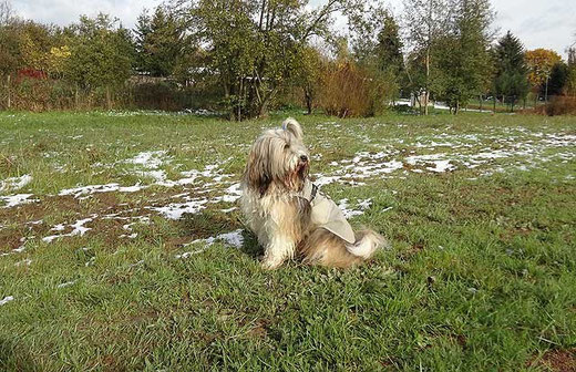 Milka - Oktober 2012 - Es hat leicht geschneit