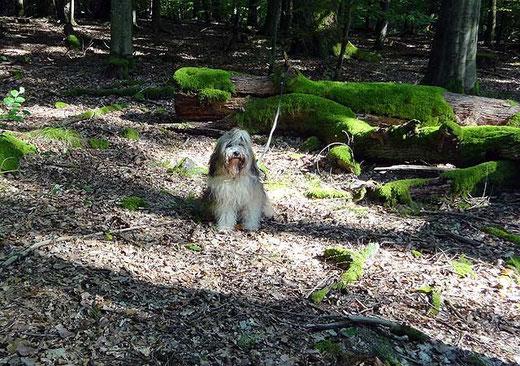 Milka - Kleines Fotoshooting im Wald