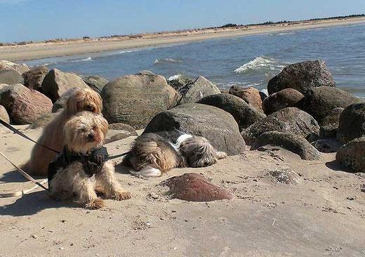 Das Trio am Strand