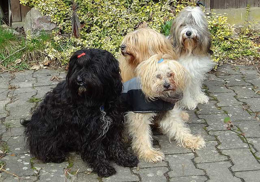 Kar-mi, Indra, Bya-ra und Milka