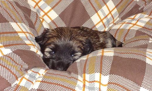F-Wurf - Femi - 3,5 Wochen alt
