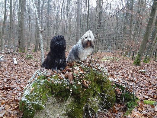 Mama Milka und Sohnemann Yeshi im herbstlichen Wald unterwegs