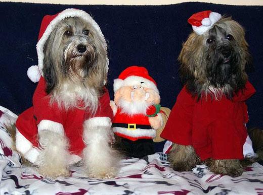 Tibet-Terrier Milka und Percy