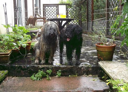 Mon-sha und Yeshi nach dem Schlammbad im Garten