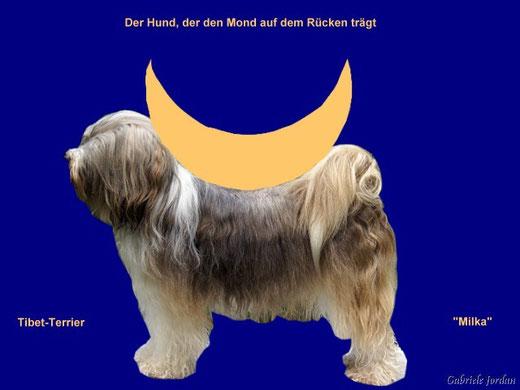 Milka, der Hund, der den Mond auf dem Rücken trägt