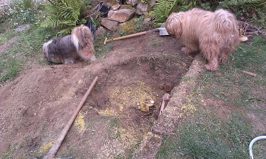 Milka und Bya-ra, die Bauaufsicht